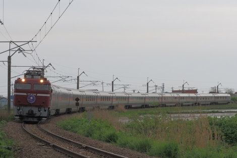 P51811811
